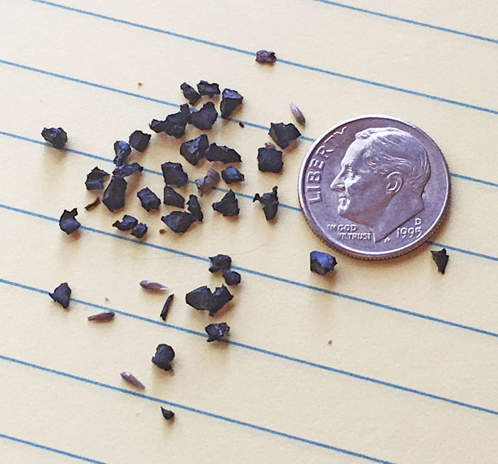 Crumb Rubber pieces from Squalicum HS field